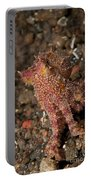 Ocellate Octopus With Two Blue Spots Portable Battery Charger