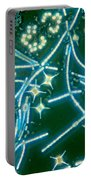 Phytoplankton Portable Battery Charger by M. I. Walker