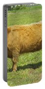 Scottish Highland Cow In Farm Field Maine Portable Battery Charger