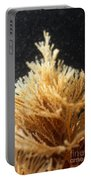 Spiral-tufted Bryozoan Portable Battery Charger