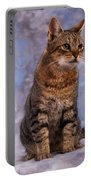 Tabby Cat Portrait Of A Cat Portable Battery Charger