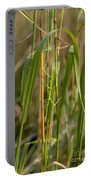 Walking Stick Insect Portable Battery Charger by Ted Kinsman