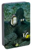 Whole Family Of Clownfish In Dark Grey Portable Battery Charger