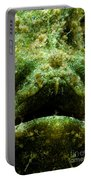 Frogfish Portable Battery Charger