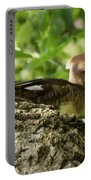 Immature Hooded Merganser Portable Battery Charger