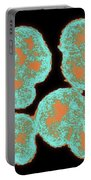 Neisseria Gonorrhoeae Portable Battery Charger