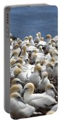 Gannet Colony Portable Battery Charger