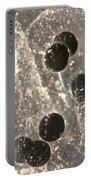 American Toad Eggs Portable Battery Charger