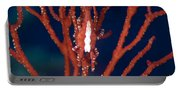 Bright Red Crab On Fan Coral, Papua New Portable Battery Charger