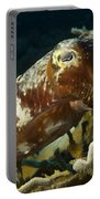 Broadclub Cuttlefish, Papua New Guinea Portable Battery Charger