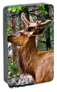 Browsing Elk In The Grand Canyon Portable Battery Charger
