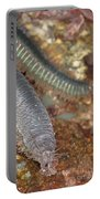 Clam Worm Portable Battery Charger