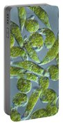 Euglena, Lm Portable Battery Charger
