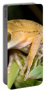 Marsupial Frog Portable Battery Charger