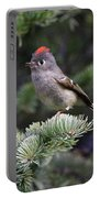 Rubycrowned Kinglet Portable Battery Charger