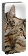 Tabby Kittens Portable Battery Charger