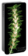 X-ray Of An Acanthus Flower Portable Battery Charger