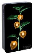 X-ray Of Chinese Lantern Plant Portable Battery Charger