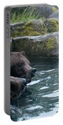 Grizzly Bear Or Brown Bear Portable Battery Charger