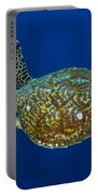 Hawksbill Sea Turtle, Kimbe Bay, Papua Portable Battery Charger