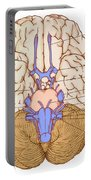 Illustration Of Cranial Nerves Portable Battery Charger