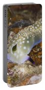 Nudibranch Feeding On Algae, Papua New Portable Battery Charger