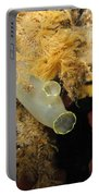Sea Vase Portable Battery Charger