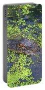 31- Alligator Hatchling Portable Battery Charger