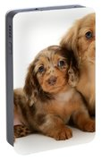 Dachshund Pups Portable Battery Charger