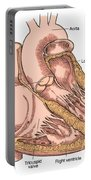 Illustration Of Heart Anatomy Portable Battery Charger by Science Source