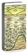 Illustration Of Stratified Squamous Portable Battery Charger