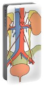 Illustration Of Urinary System Portable Battery Charger by Science Source