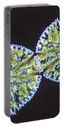 Micrasterias Denticulata Portable Battery Charger by M. I. Walker