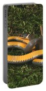 Northern Ringneck Snake Portable Battery Charger