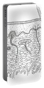 Skin Anatomy Portable Battery Charger