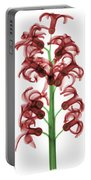 X-ray Of Hyacinth Portable Battery Charger