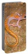 Cave Salamander Portable Battery Charger