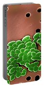 Vancomycin Resistant Enterococci Portable Battery Charger