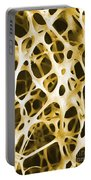 Sem Of Human Shin Bone Portable Battery Charger by Science Source