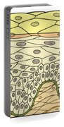 Illustration Of Stratified Squamous Portable Battery Charger by Science Source