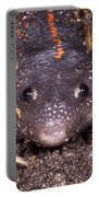 Mexican Burrowing Toad Portable Battery Charger