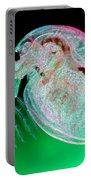 Water Flea Daphnia Magna Portable Battery Charger