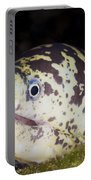 A Chain Moray Eel Peers Out Of Its Hole Portable Battery Charger