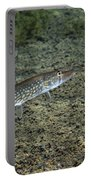 A Chain Pickerel Wimming The River Portable Battery Charger by Terry Moore