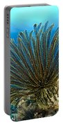 A Feather Star With Arms Extended Portable Battery Charger