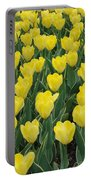A Field Of Yellow Tulips In Spring Portable Battery Charger