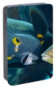 A French Angelfish Swims Up Close Portable Battery Charger