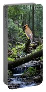 A Giant Cedar Waxwing On Mt Spokane Portable Battery Charger