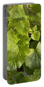 A Green Leafy Vegetable Plant After Watering In Bright Sunrise Portable Battery Charger
