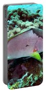 A Hogfish Swimming Above A Coral Reef Portable Battery Charger